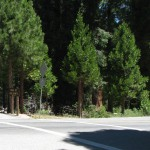 Trail of 100 giants Main road