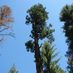 Tall Tree on Frandy Park Campground